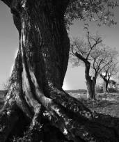 Andrej Podobnik, ''Drvored'', fotografija