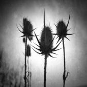 Anita Nadj: ''Soldiers of the rising sun'', fotografija